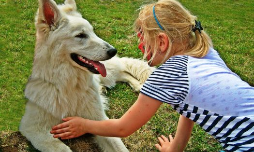 kind bang voor honden